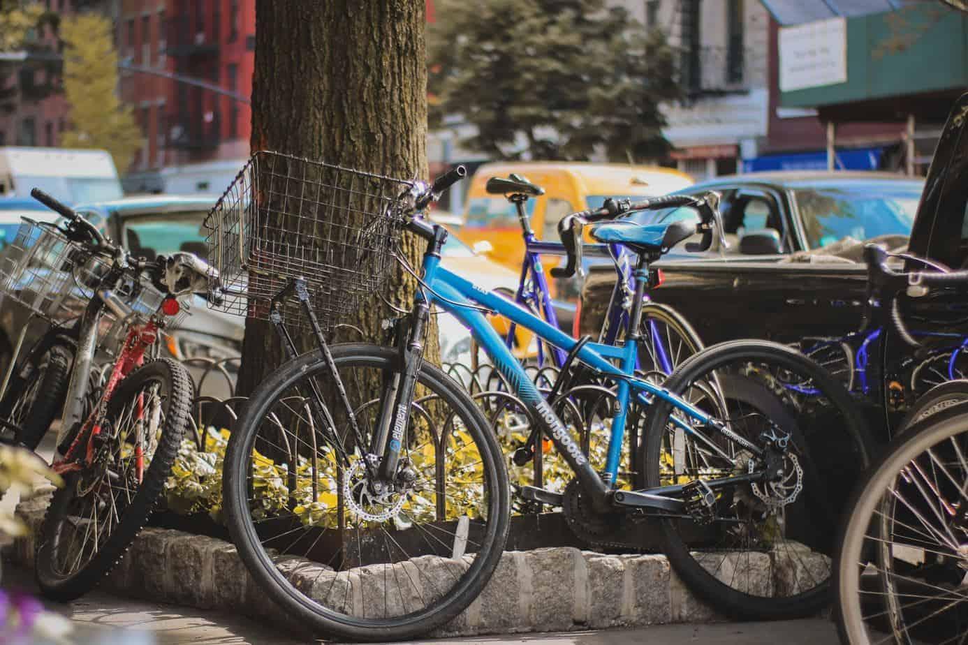 bicicletas alrededor de un árbol
