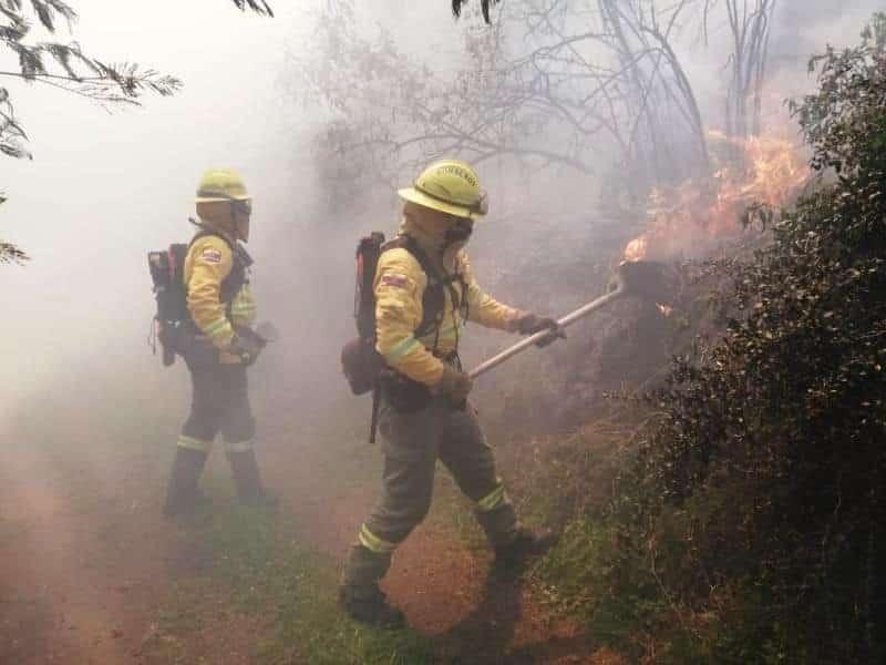 Bomberos combaten incendio forestal al norte de Quito