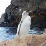 pingüino blanco